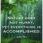 Nature does not hurry…